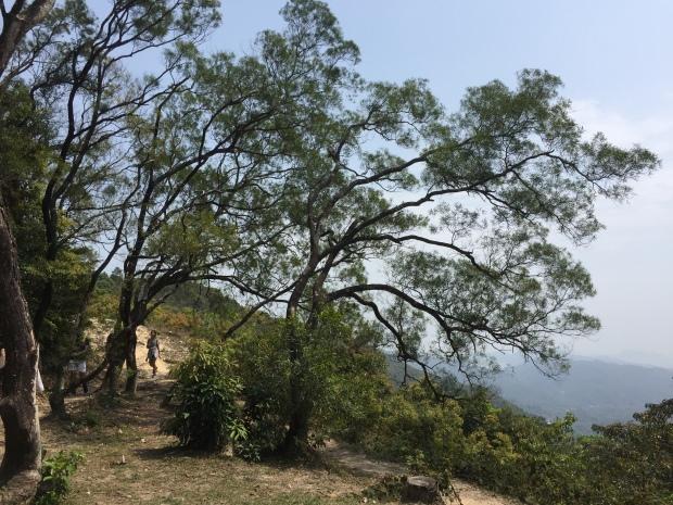 IMG_9203 Maclehose Trail Sec. 3, Sai Kung
