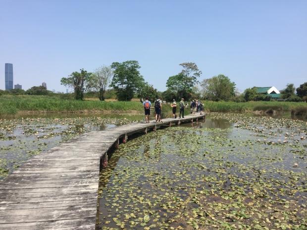 IMG_9290 Mai Po Nature Reserve